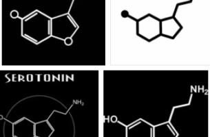 serotonin nedi